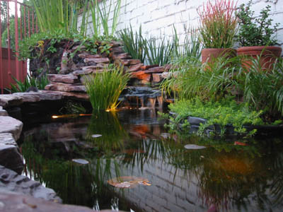 Koi fish pond cleaning los angeles la koi fish pond care for Koi pond maintenance service